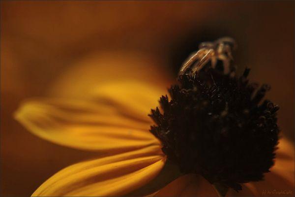 Ein goldenes Spinnlein...