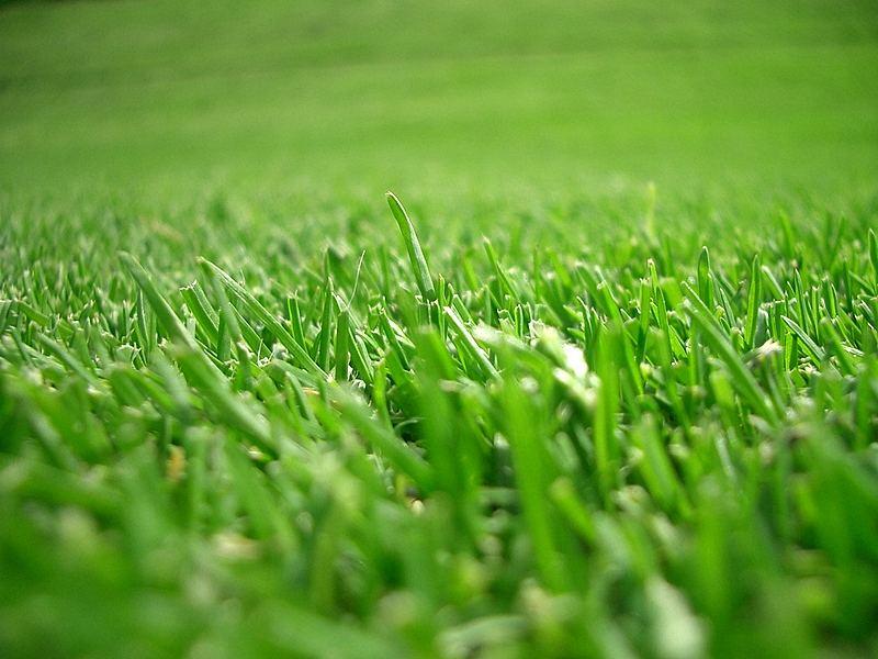 Ein Golfgrün