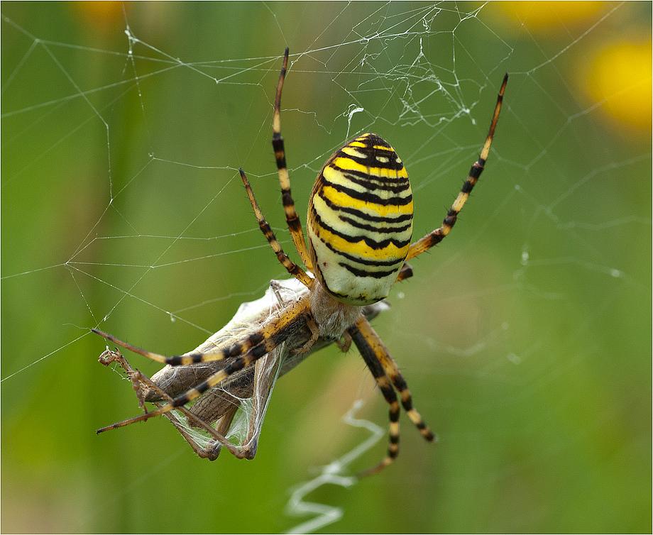 Ein großer Brocken für die Spinne