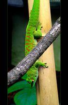 Ein grüner... (2)