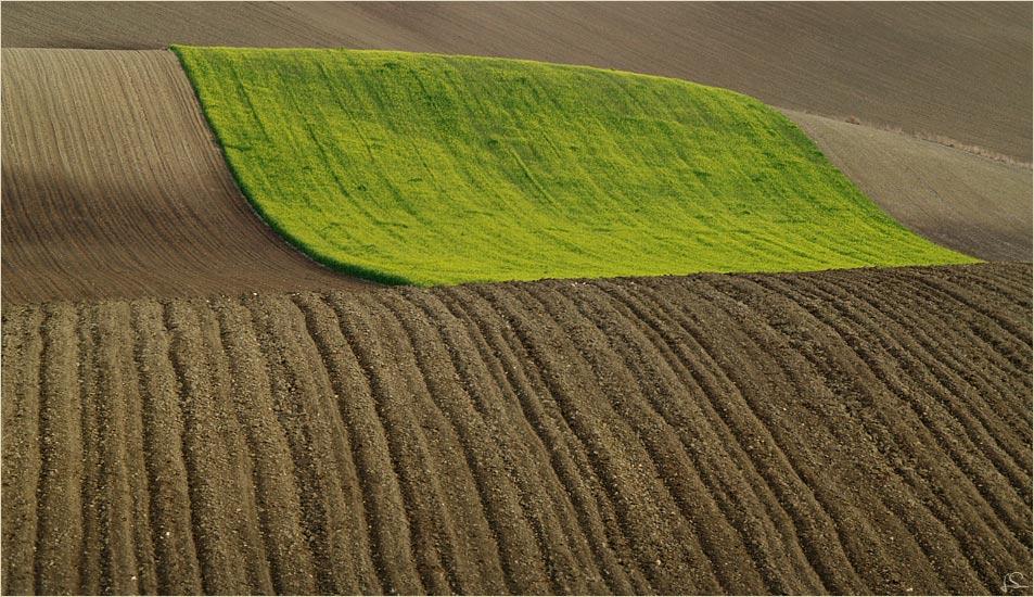 ...ein grüner Teppich...