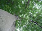 Ein grünes Dach