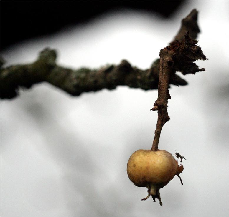 Ein Gruß aus Mücke ,-)