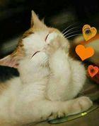 ein gute Nacht Küsschen für dich