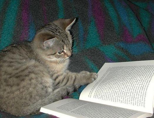 Ein gutes Buch hat noch niemandem geschadet...