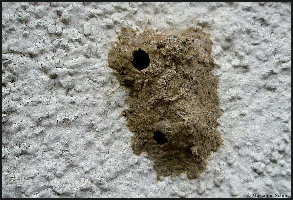 ein h uschen am haus foto bild tiere wildlife insekten bilder auf fotocommunity. Black Bedroom Furniture Sets. Home Design Ideas