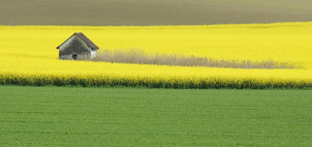 ein Häuschen im Gelben