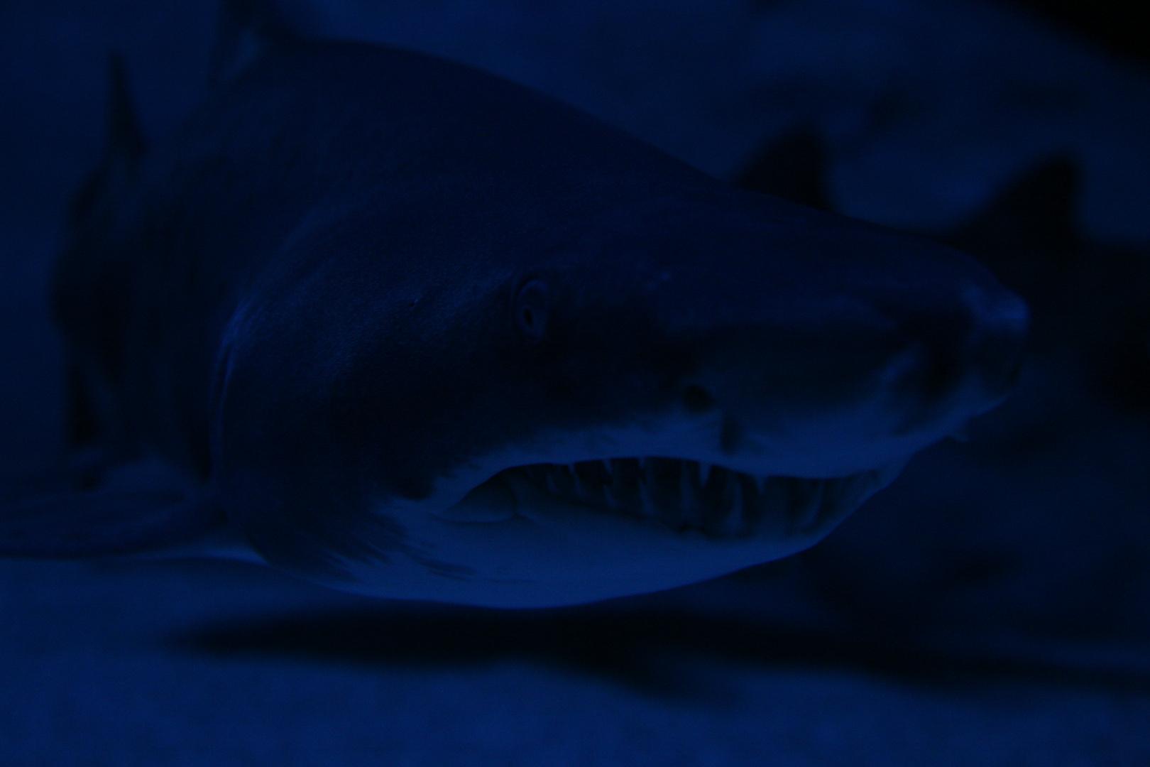 Ein Haifisch der hat Zaehne..........