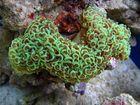 Ein Hammer die Koralle :-)