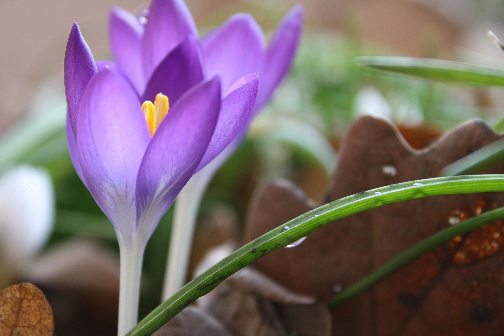 ein Hauch Frühling...und schon vorbei