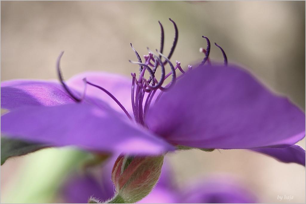 Ein hauch in lila.