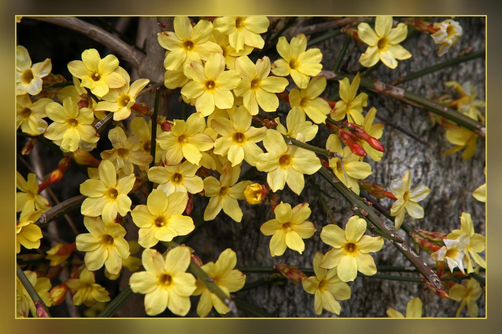 ein Hauch von Frühling.....