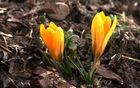 ein Hauch von Frühling 2