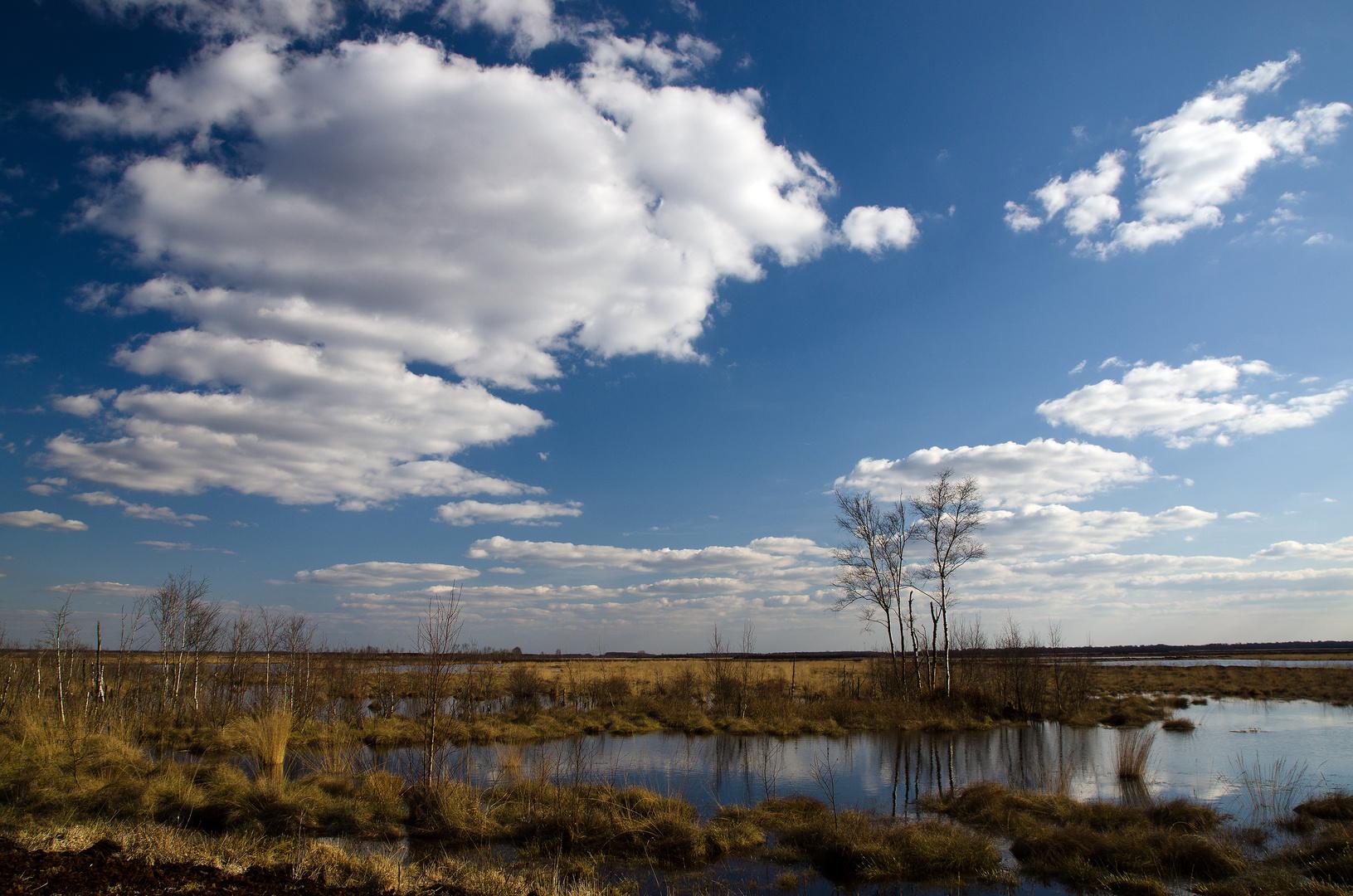 Ein Hauch von Frühling im Goldenstedter Moor