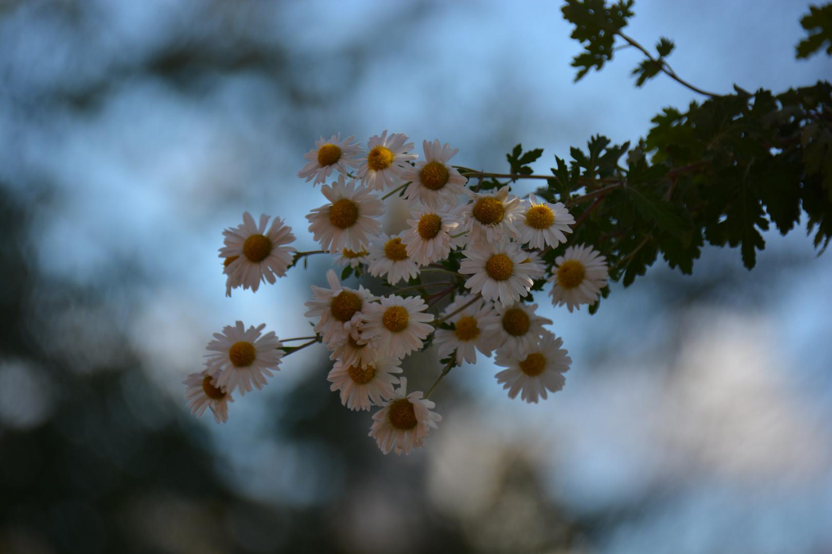 Ein Hauch von Frühling im November