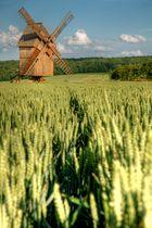 Ein Hauch von Holland...