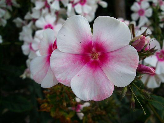 ein Hauch von rosa