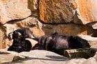 Ein heisser Tag im Zoo