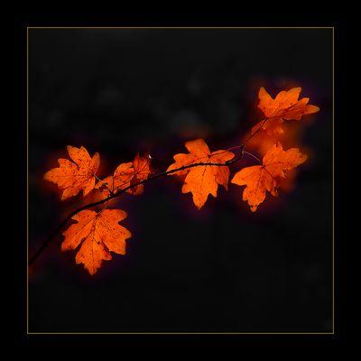 Ein Herbst wie im Traum