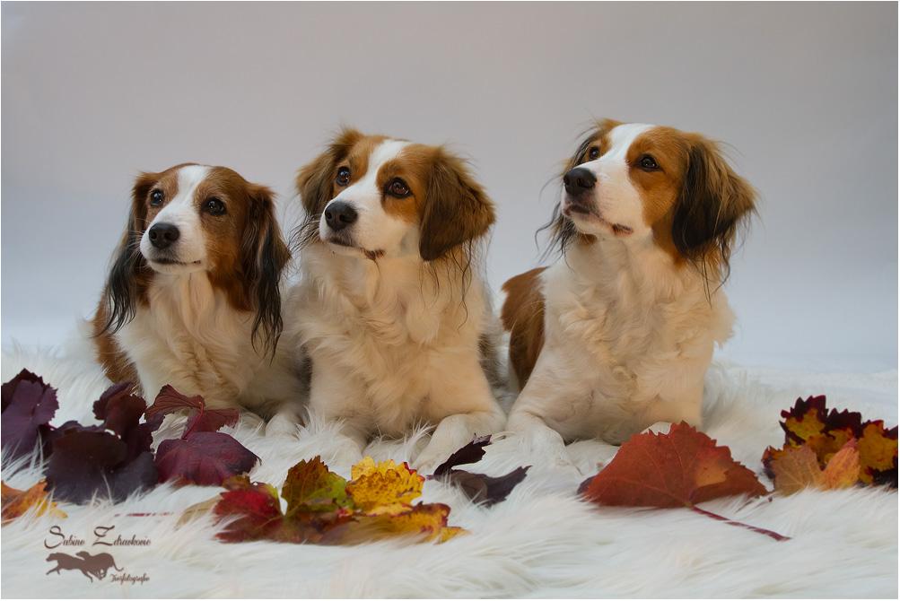 Ein Herbstgruß
