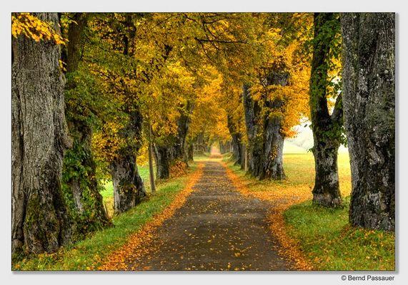 Ein Herbstspaziergang