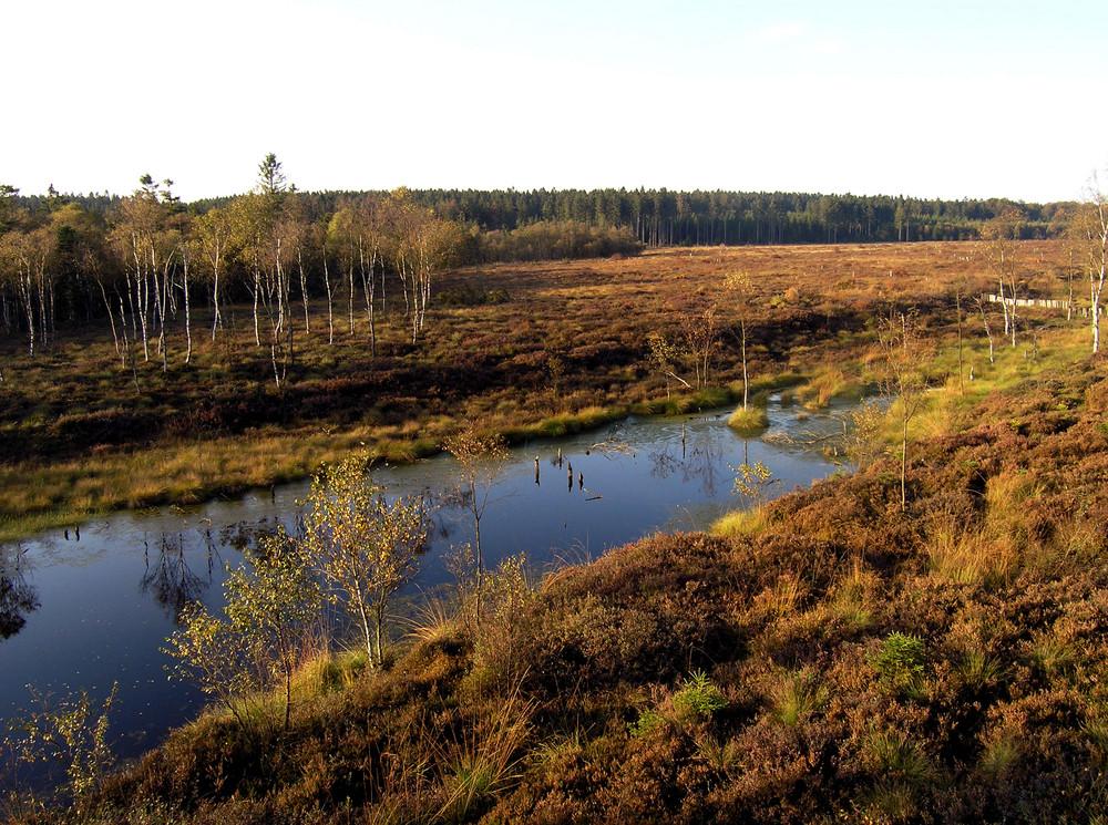 Ein Herbsttag am Hochmoor Mecklenbruch