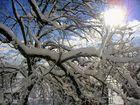 ein herrlicher Wintermorgen