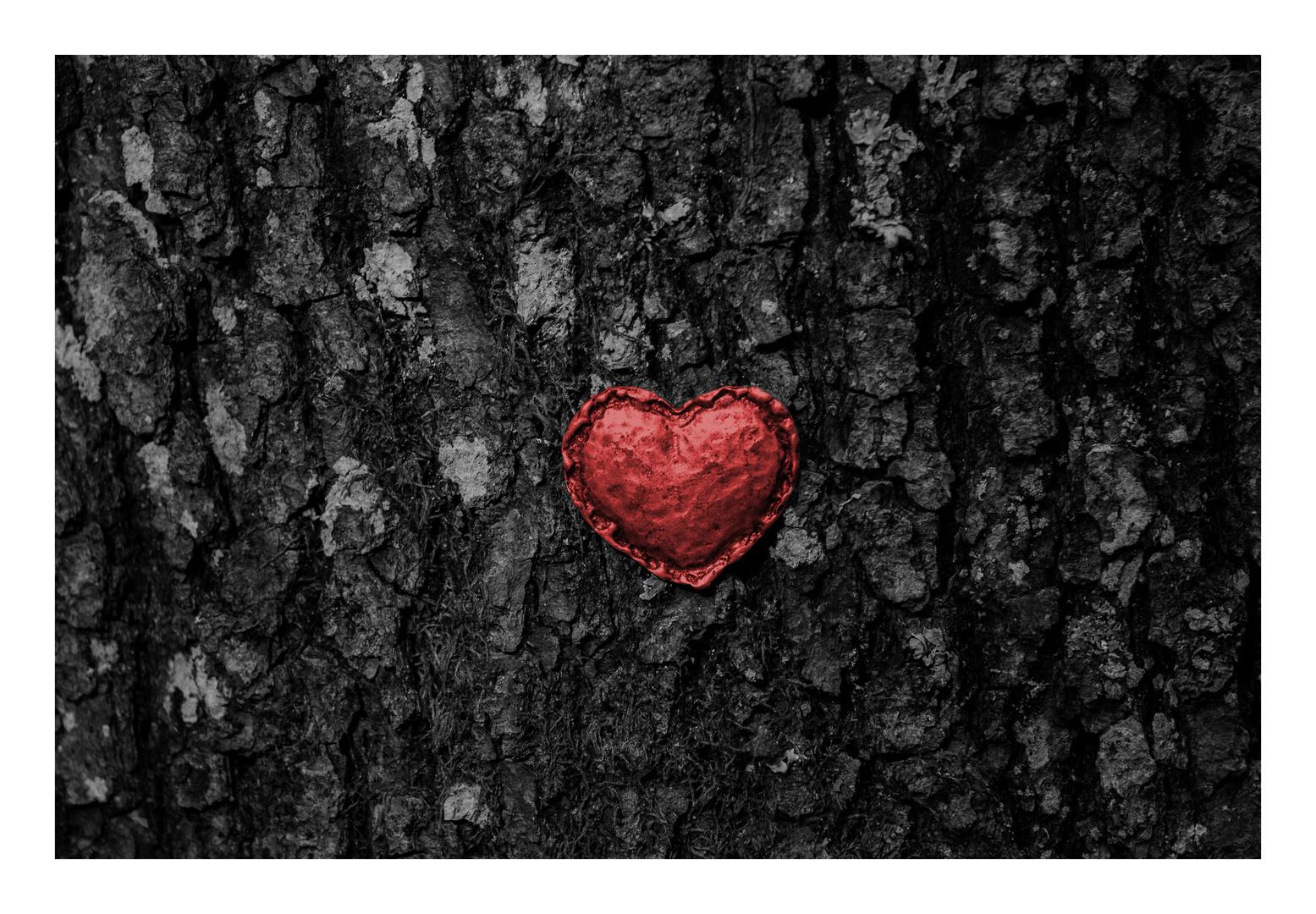 Ein Herz für Bäume