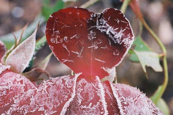 ein herz für den frost
