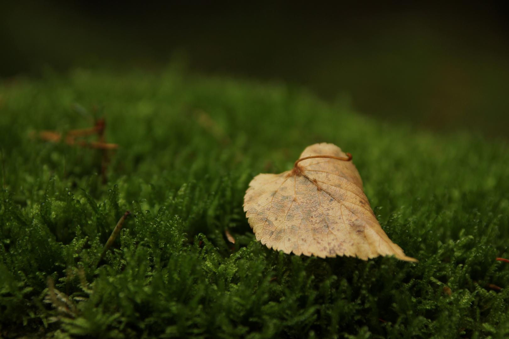 ein Herz für den Herbst