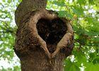 Ein Herz für Euch....