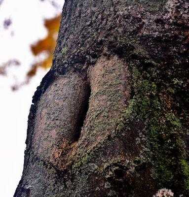 ein Herz im Baum....