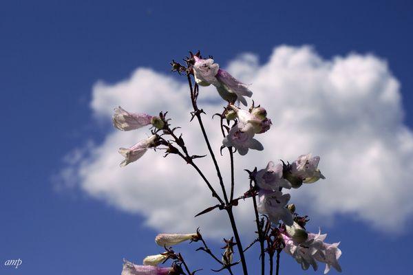 ein Himmel voller Glöckchen