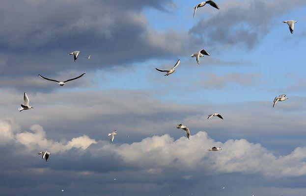 Ein Himmel voller Möwen...