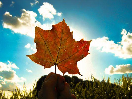 Ein Hoch auf den Herbst