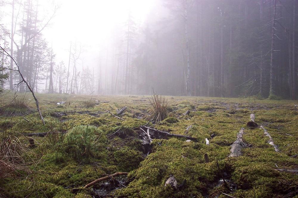 Ein Hochmoor im Nebel... unheimlich Schön