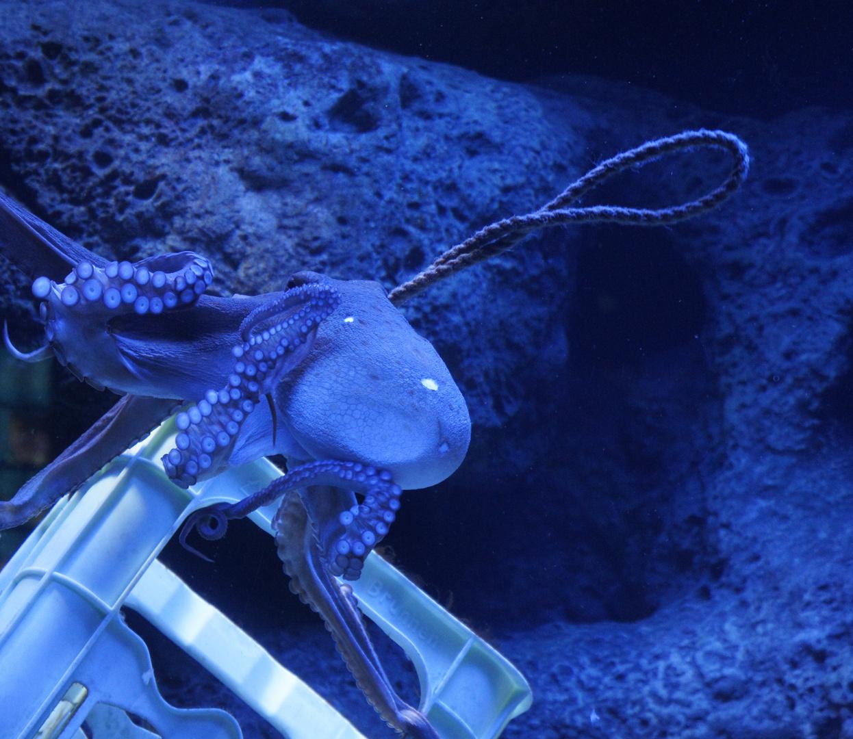 Ein höchst faszinierendes Tier - Zoo am Meer,Bremerhaven