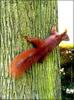 Ein Hörnchen macht noch keinen Sommer