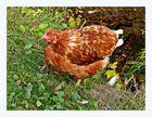 Ein Huhn in einer schönen Umgebung