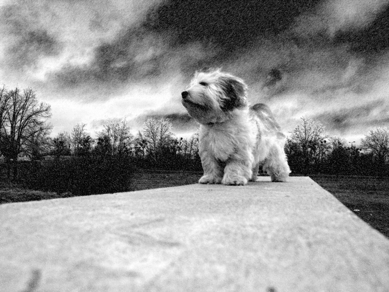 Ein Hund bleibt Dir im Sturme treu, ein Mensch nicht mal im Winde