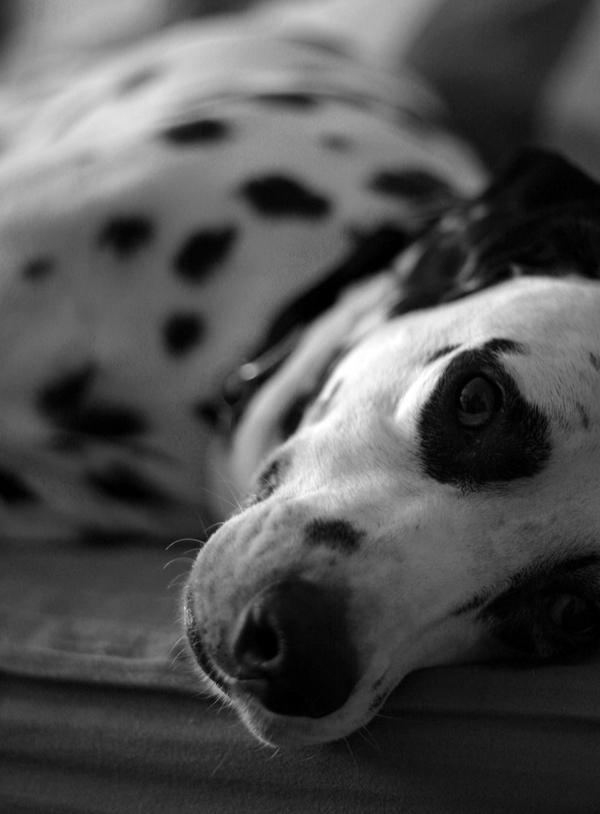 Ein Hund in Teilakt