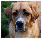 Ein Hund Namens Buffy für Leòn zum siebten Geburtstag