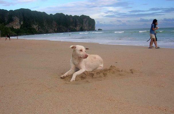 Ein Hundeleben...dort leben zu müssen, wo andere Urlaub machen