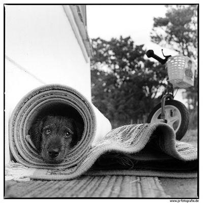 Ein Hundeportrait ist ein Muss in jedem FC-Portfolio!