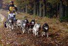 Ein Hunderennen im mystischen geheimnisvollen Waldviertel ------ Part 5