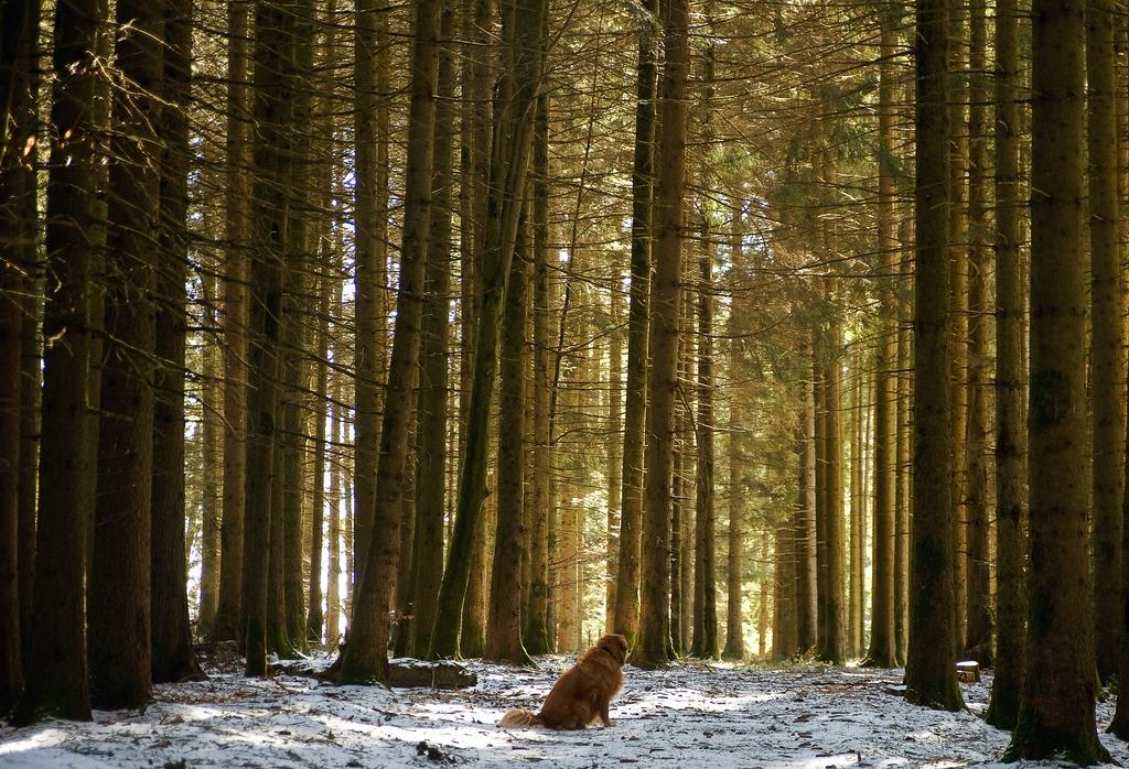 Ein Hundi sitzt im Walde