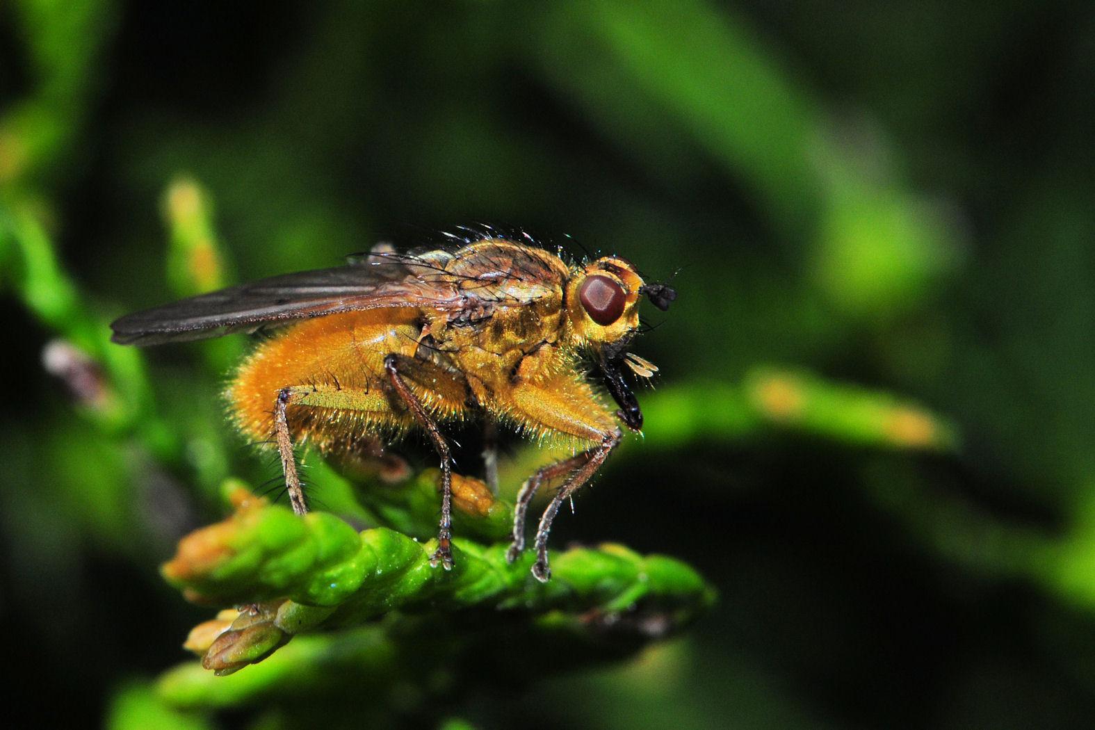 Ein Insekt