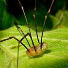 Ein Insekt ! Sechs Beine, in Segmente gegliederter Körper - paßt !