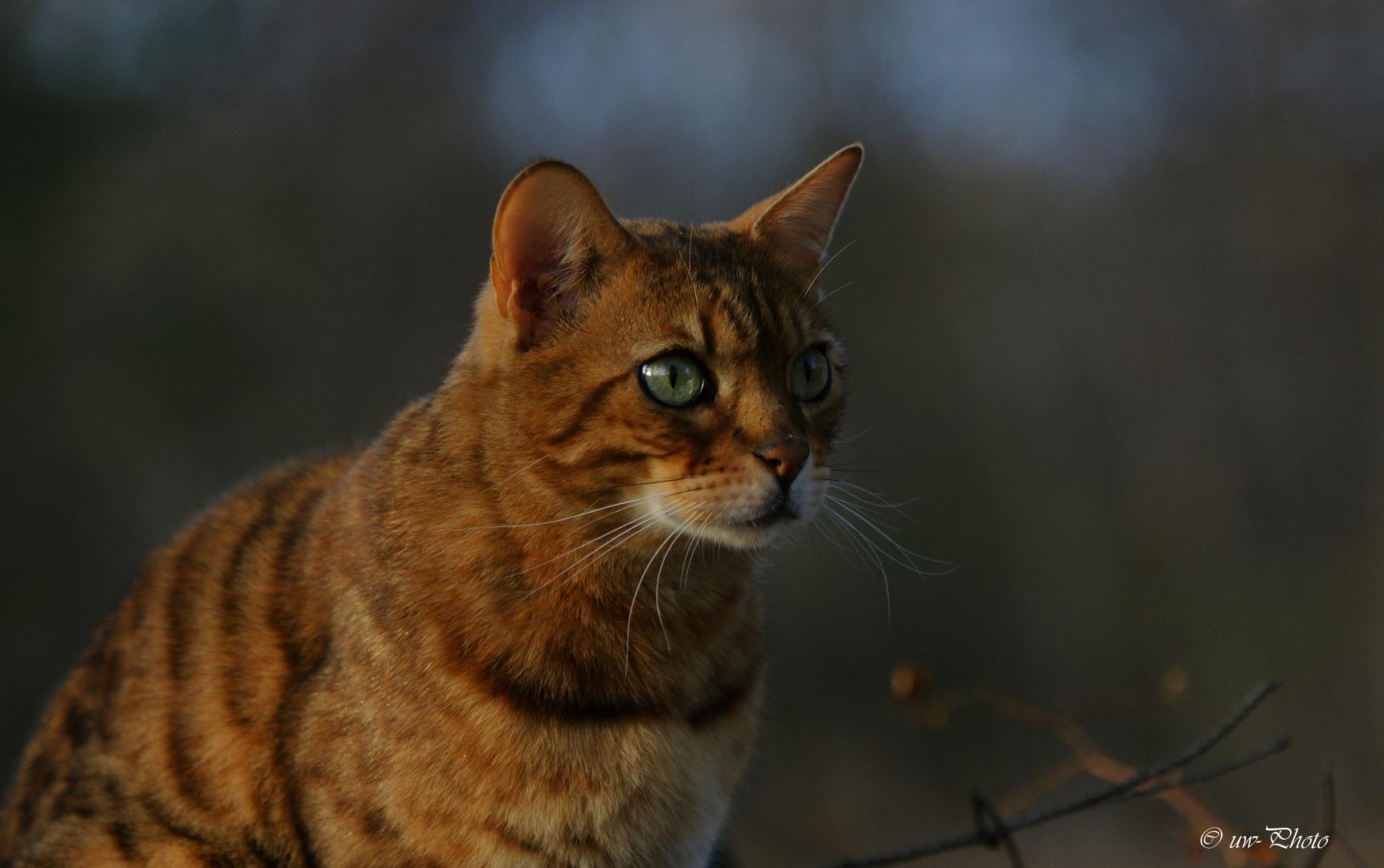 Ein Jäger schaut durch die Nacht....