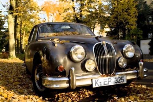 Ein Jaguar im Herbst
